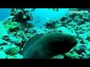 Diving Maldives Maalhos Baa Atoll