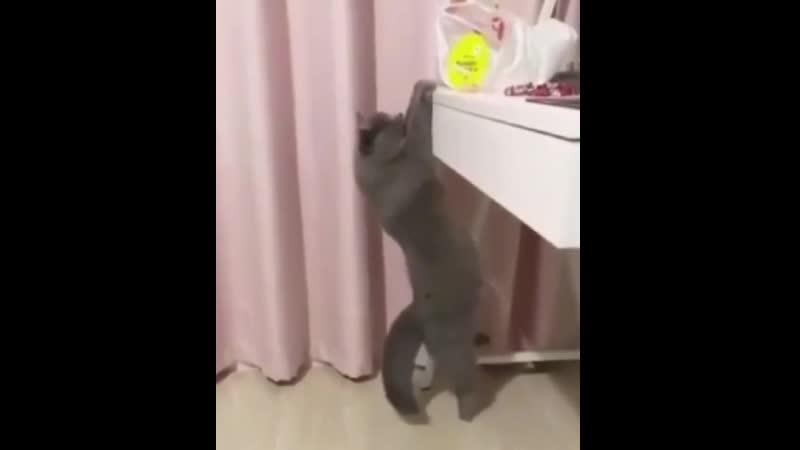 Даже котик качается к лету а ты нет