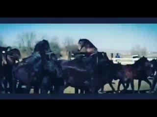 kabardian_horses_nalchik___Bvs4qFNFtlp___.mp4