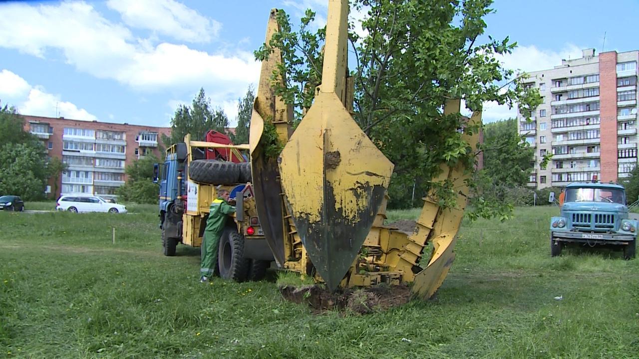 Бережно пересадили деревья