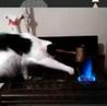 "Kucing Lucu on Instagram: ""Bocah ngapa sih? 🙄 ▪️▪️▪️▪️▪️ 🎥 Via: unknown (DM for credit or removal) 🐾 Tag teman kamu ❤️ Dapatkan update terbaru tent..."