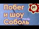 Побег и шоу Соболь