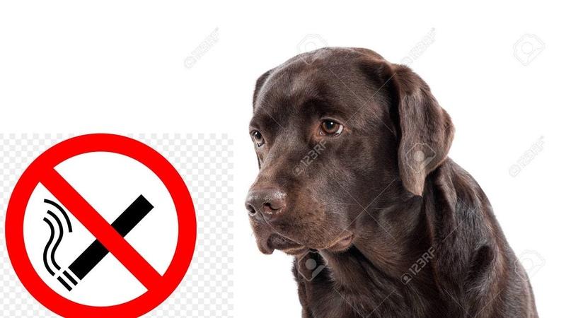щенок принял участие в социальной рекламе против курения