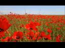 Т Халиуллин Импровизация Полевые цветы