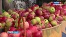В Брянске на площади Воинской Славы прошёл фестиваль яблок мёда и доброго кино