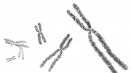 Сдать генетический тест можно на наследственные заболевания почек.