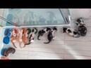 Топ 9 безнадежных котят которых удалось выходить Спасение котят Новосибирск cat rescue