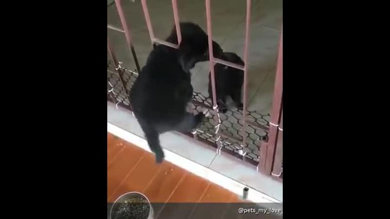 Самый милый побег и помощь друга! 😍😘👍