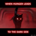 OwlKitty on Instagram Feel the pawer of the dark side.