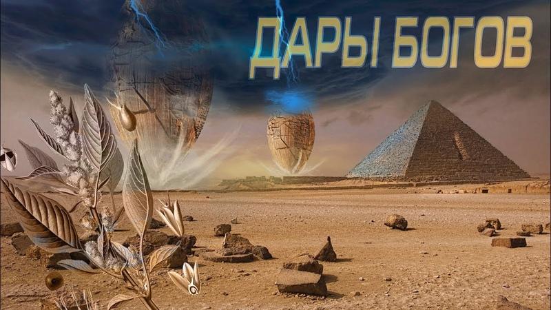 Андрей Жуков Дары Богов