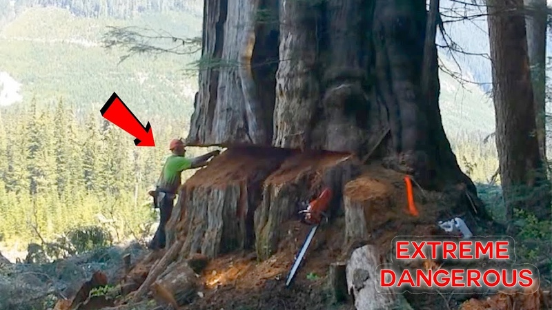 TOP 10 Most Dangerous Biggest Tree Felling Cutting Down with Chainsaw Machine EP 2
