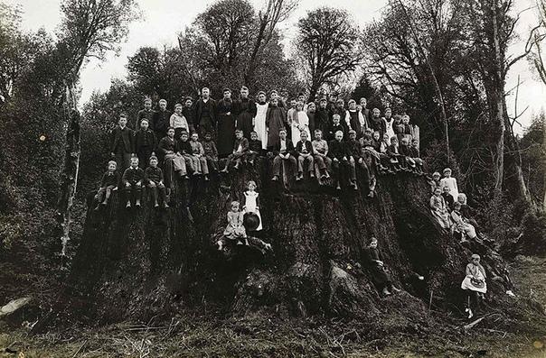 На этом снимке, сделанном в 1890 году, запечатлен филдбрукский пень.