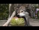 Волки которые спасли беременную женщину