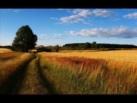 Пшеница золотая\ Golden wheat Anastasiia Vetkina Aleksei Vetkin