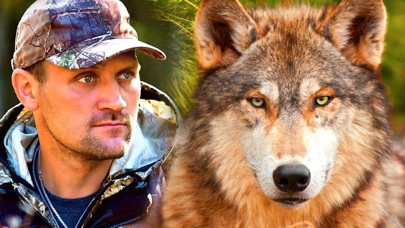 Охотник нашел маленького волчонка в лесу А через несколько лет волк пришел к нему на помощь