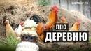 Анекдоты и шутки про деревню, село и деревенских жителей