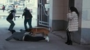 Собака спасла жизнь Короткометражный фильм со смыслом