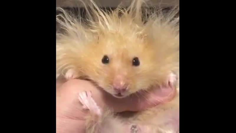 Actual footage of me having a bad hair day 😂💁‍♀️
