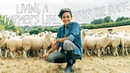British Sheep Farming Living A Farmer's Life For The Day
