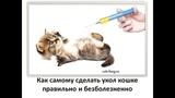 Учимся делать  укол кошке и не допускать ошибок  To make a prick a cat