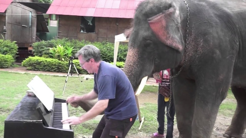 12 Bar Blues - Piano Duet with Peter the Elephant - Thailand (слоны танцуют под музыку пианино)