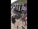 Donkey Ride in St Kitts