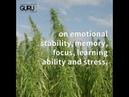 Best cannabis strains for ADHD