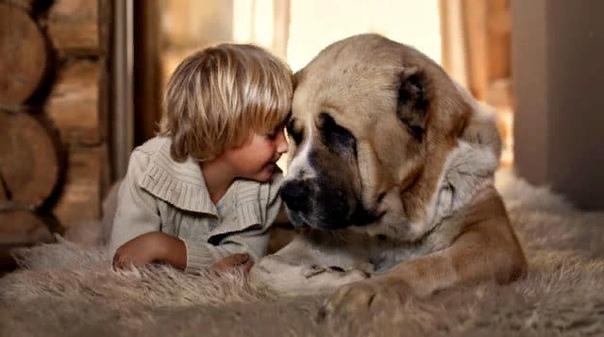 Как правильно православному верующему относится к животным