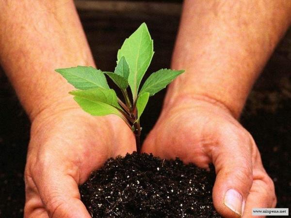 Афиша Самара Да Восстановлению леса