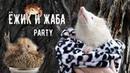 ЕЖИК-ЖАБА-ЛЯГУШКА PARTY. Ежи, лягушки, жабы на веселой фотосессии. Еж, ежики, hedgehog.