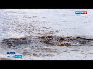 Лох-несское чудовище заплыло в Псков? Сегодня утром новость о странном обитателе реки Великой всколыхнула Псков