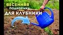 Чем удобрять клубнику весной для супер урожая! Весенняя подкормка для клубники!