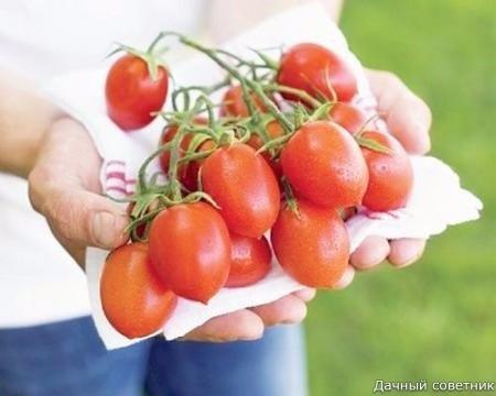 Несколько «нельзя» при выращивании томатов, удобрения для томатов