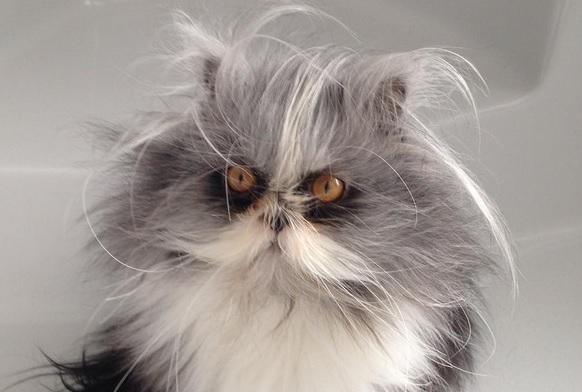 3JOqExBh1Yg - Кот из Канады похож на Чокнутого профессора