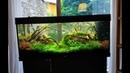 Чем я клею коряги и мхи в аквариуме