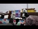 Три медведя (БОЛЬШАЯ ЛУЖА-6)