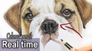 How to draw a realistic Bulldog nose in colored pencil | Step by step
