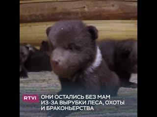 Милые медвежата в безопасности