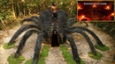 Build Giant Spider and Most Secret Underground Swimming Pool