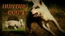 Hog and Bear hunting with dogsWest Siberian Laika