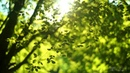 Dinlendirici ve rahatlatıcı Bülbül sesi eşliğinde ruhunuzu dinlendirin 3 saat sürecek rahatlama