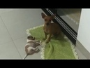 How Mother Dogs Handle Disrespectful Puppy