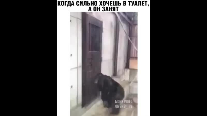 Когда сильно хочешь в туалет