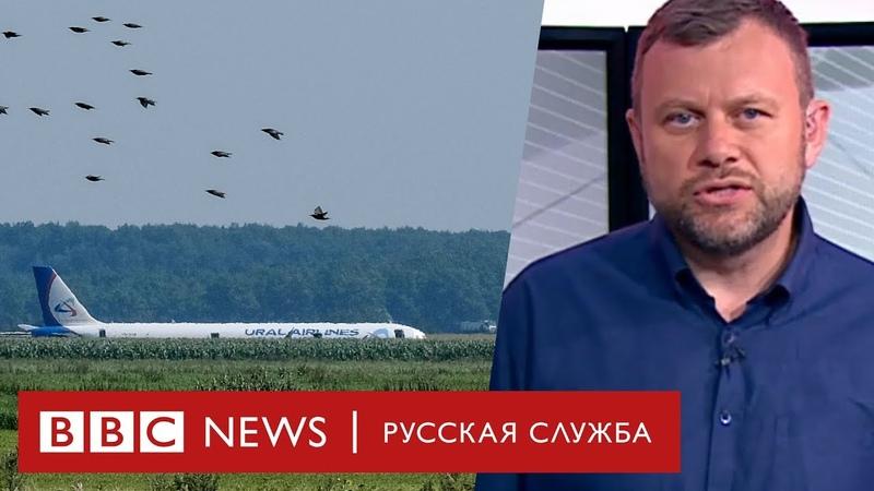 Откуда взялись чайки, которые сбили самолет в Жуковском? | Новости