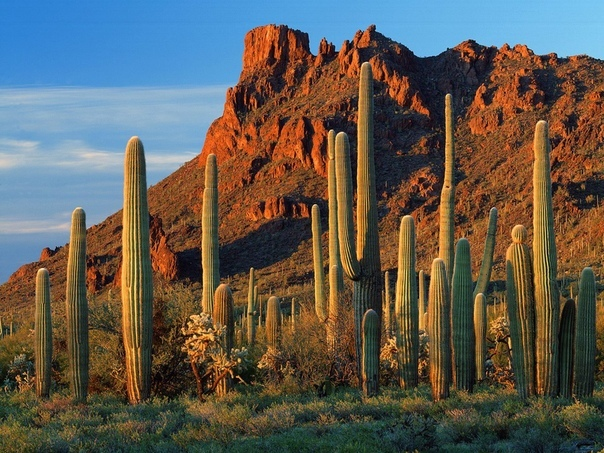 Каньон Аламо, Аризона.