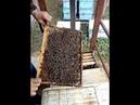 Расширение 6 рамочника! Песня про пчеловодов!