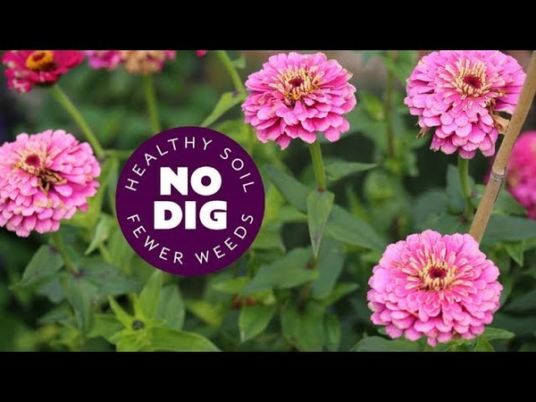 Flowers no dig for summer tips on planting and care