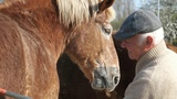 An effective horse comb to remove the winter coat from a draft horse