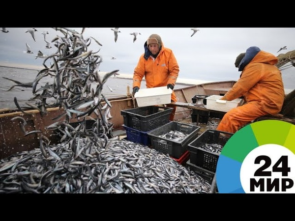Корюшка пошла питерские рыбаки заступили на вахту МИР 24