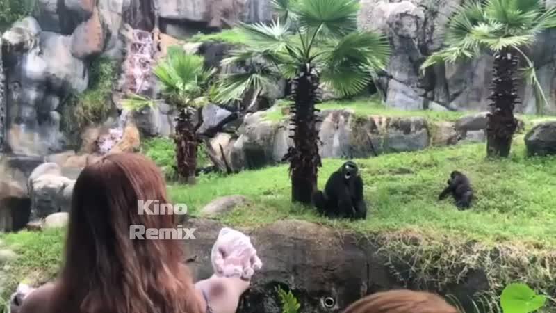 ленивая горилла и трёхочковый бросок kino remix 2019 ржач приколы с животными